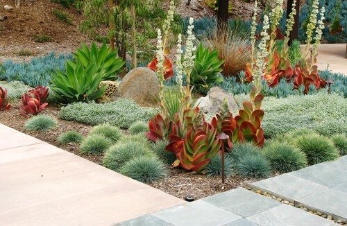 If you look hard enough you can find a unique and visually intriguing combination of plants. There are many uncommonly used plants that can truly set your garden apart.