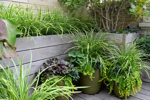 Grass-type plants are great for filling space as well as providing depth and variety to your garden. If you have unused space, filling it with plants can make your area feel more cozy and lively.