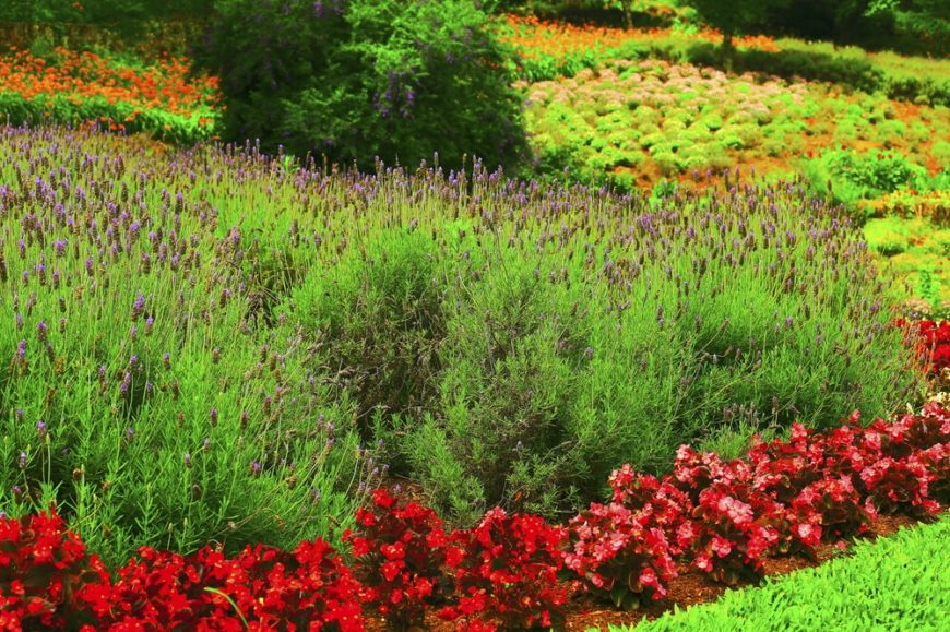 When you have a large garden you have the space to utilize plants to outline the plots of other plants. Here we see a red plant outlining the planted spaces of the other flowers.