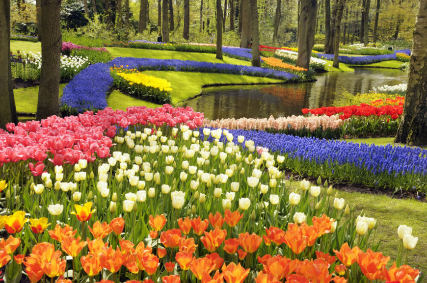 If you desire a uniformed and very controlled look these flowers are more ideal. Tulips are fantastic at staying put in their patterns and rows. They are a reliable way to make designs with flowers.