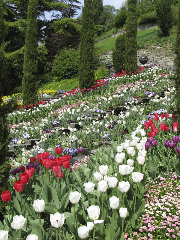 Large gardens are wonderful for large unused spaces. Hillsides are spaces where you may have only a few options. To make these spaces look brilliant you can plant some resilient plants to turn your hillside glorious.