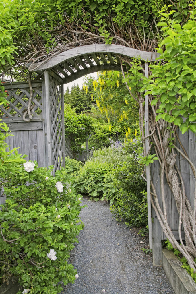 Wooden lattice makes a great base for a vine garden. Lattice is easy for the vines to weave themselves into and the vines can also be seen from both sides. This makes it the ideal start for a vine garden.