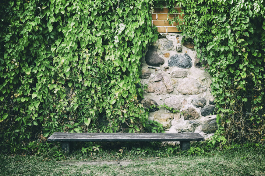 Vine covered walls are a great backdrop for a relaxation spot or patio. When vines cover brick and stone walls they often leave small gaps in the vines where you can see the wall, creating great depth and texture.