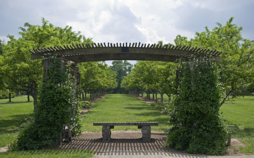 Here we see a wooden arch with a bench under it. The vines have managed to climb up the sides of the structure but not quite across the ceiling. This process can take time.