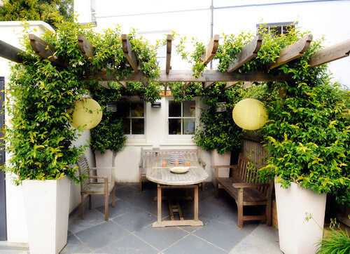 Vines are great at bridging planter areas. If you have separate gardens or planters, unify them with a crawling vine across an archway. It's one of the best ways to tie all of your plants together.