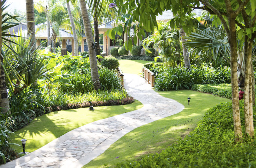 Palm trees provide good shade without taking up a great deal of ground space. The long and thin trunks of the trees keep the canopy high and out of the way. Very few branches will be in your way if you use palm trees.
