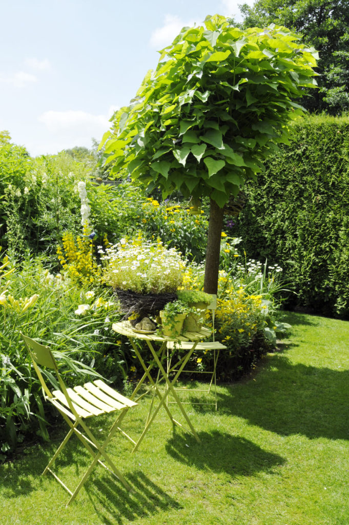 This tree is a great addition to this green plant garden. The tree is not tall enough to provide much shade but does create an amazing punctuation to this garden. It works to give focus and a center to the space.