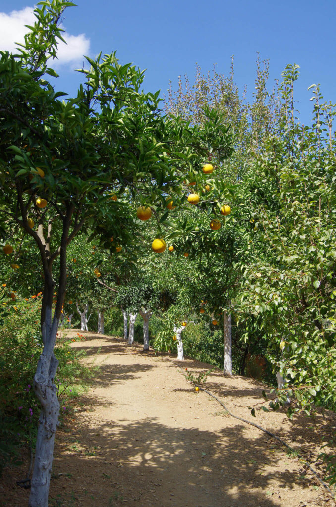 If you prefer your plants to have function and form, opting for fruit trees is an amazing idea. Trees are a low maintenance way to provide some extra produce for you and your family. This kind of tree can earn its own keep by bearing edible fruit.