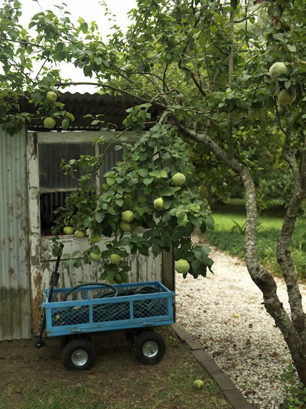 Even a single fruit tree will produce plenty of fruit. Make sure to pick a fruit that suits your area, as well as one that you like enough to eat often. It may be beneficial to look into one that produces a fruit your friends and family won't mind taking off your hands once in awhile.