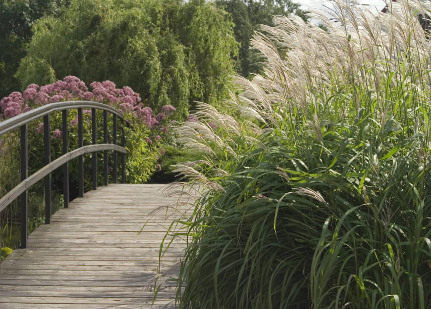 This bridge has some wonderful tall grasses at the end. This provides a marshy waterfront appeal. These tall grasses are not what you typically imagine when you think of a grass lawn, but they are some of the more interesting kinds of grass that can be used in landscaping.