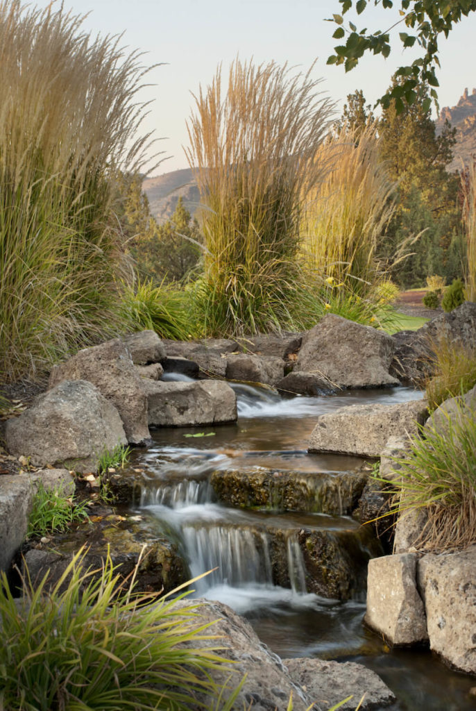 These wild and tall grasses bring this stone waterfall to life with a pleasant profile of texture and color. This combination is the perfect collection of elements to make a water feature feel incredibly natural.