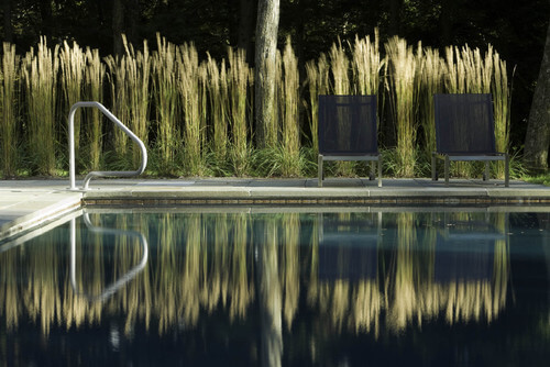A line of tall grasses can be a great backdrop for a pool area. It can function to block some sightlines while giving a marshy look to your swimming hole.