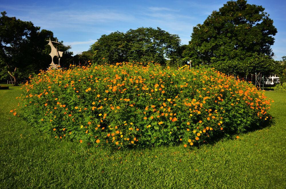 Flower bush style garden.
