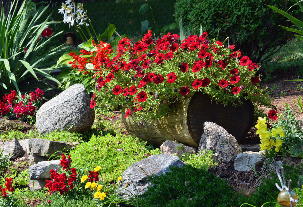Small garden on top of and surrounding a log.