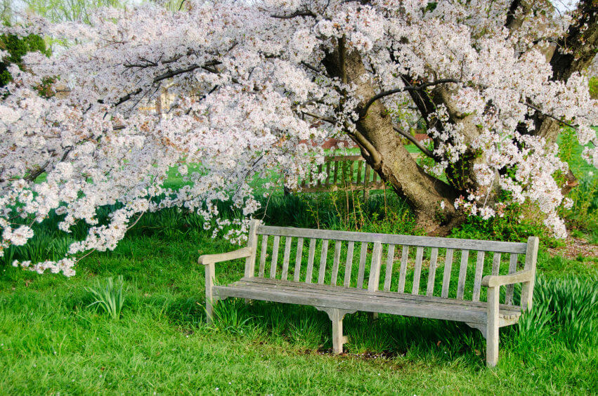 Enjoy the lovely blossoms of this dogwood tree by sitting on this rustic wood bench set into the grassy ground.