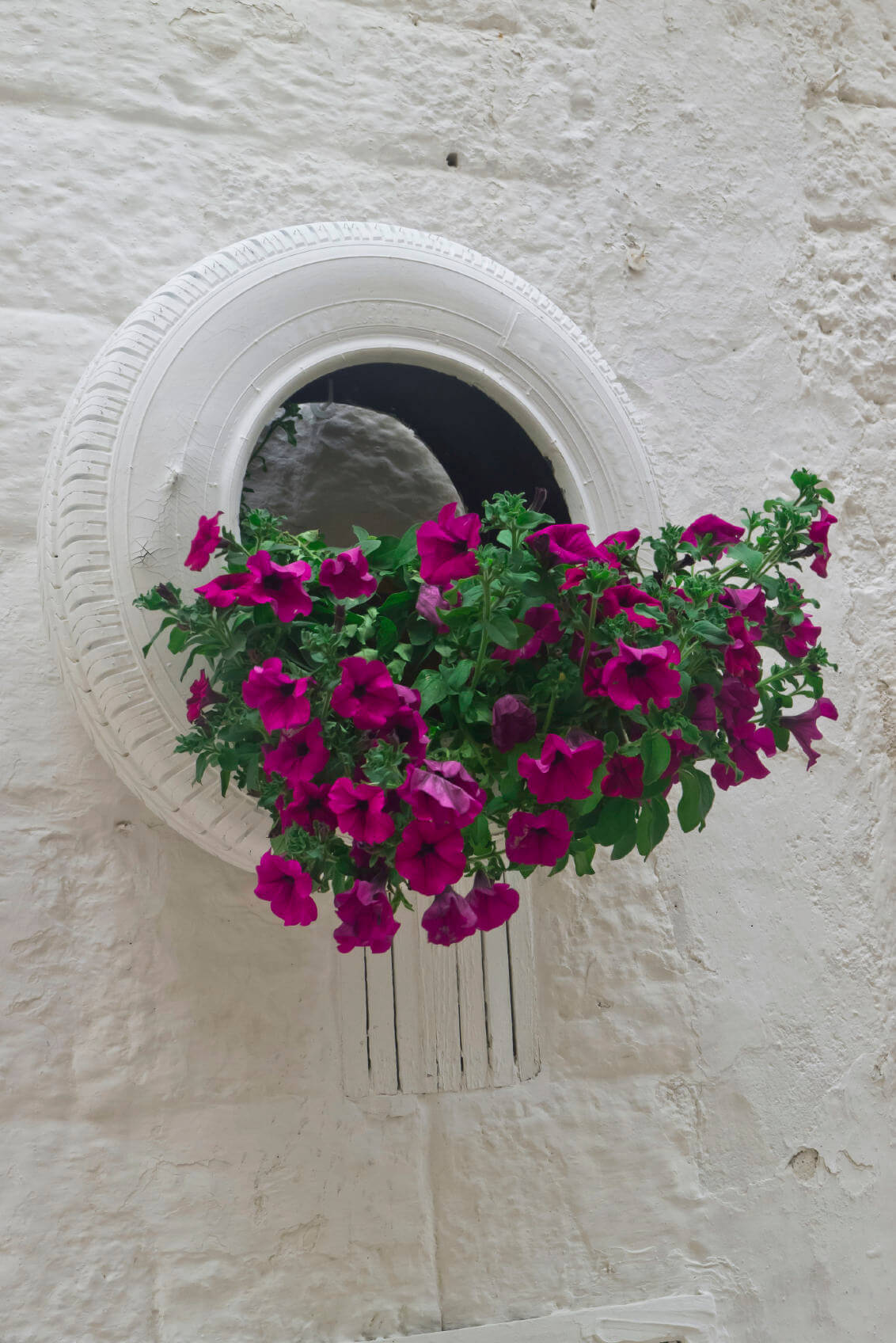 tire planter painted white and hung on white wall holding large bunch of flowers.