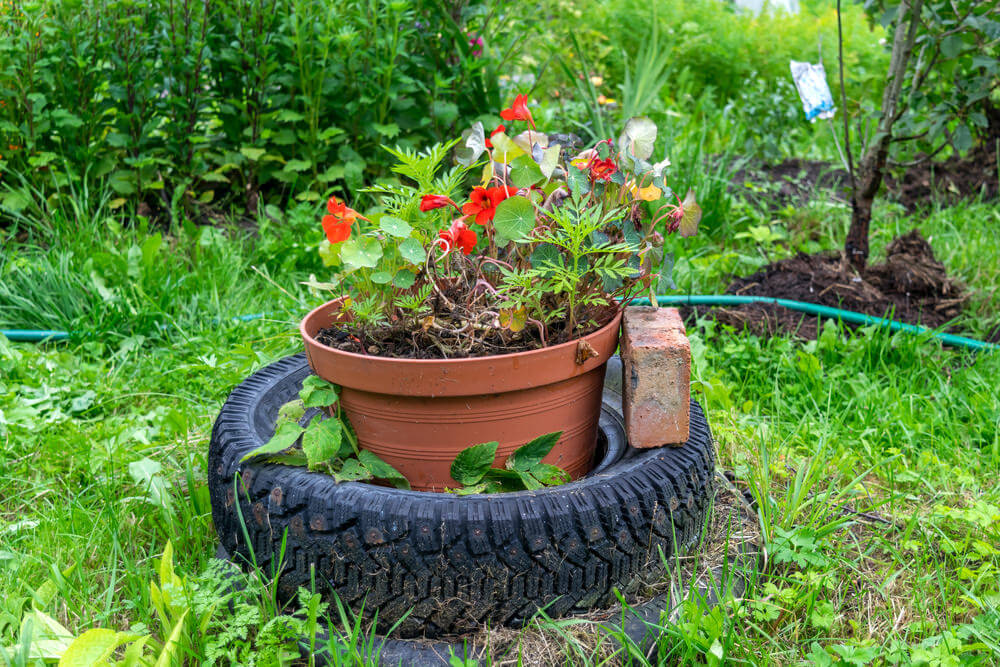 A large tire with flower pot inserted to hold the flowers.