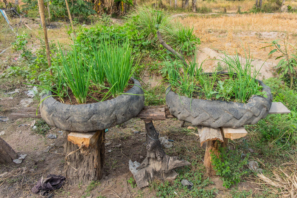 2 large tractor tires sitting on wood stumps serving as mini-gardens.