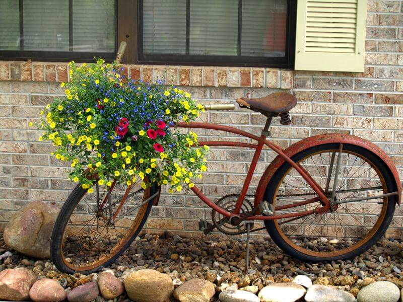 Rusty old bike with bright shimmering yellow, red and blue flowers.