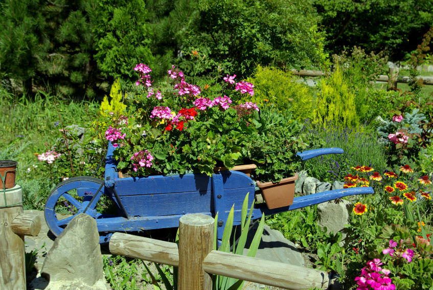 Small blue wooden wheel barrow planter loaded with flowers and placed in the middle of a rock garden.