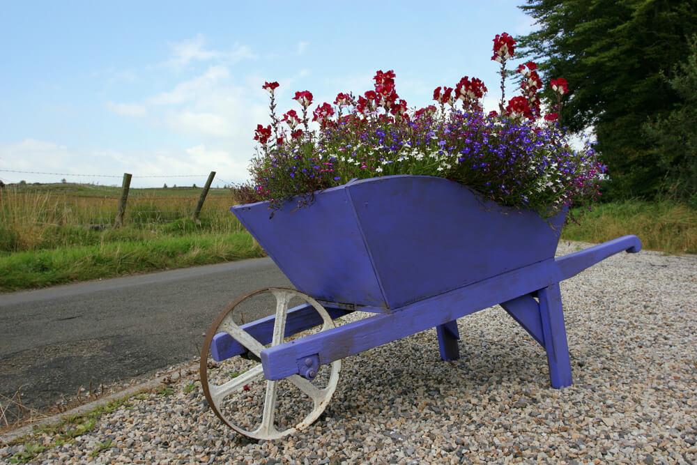 Purple wood wheelbarrow planter with white wheel.