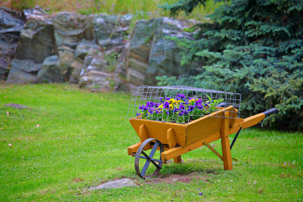 Simple painted wood wheelbarrow planter with metal wheel and wire cage protecting the flowers.