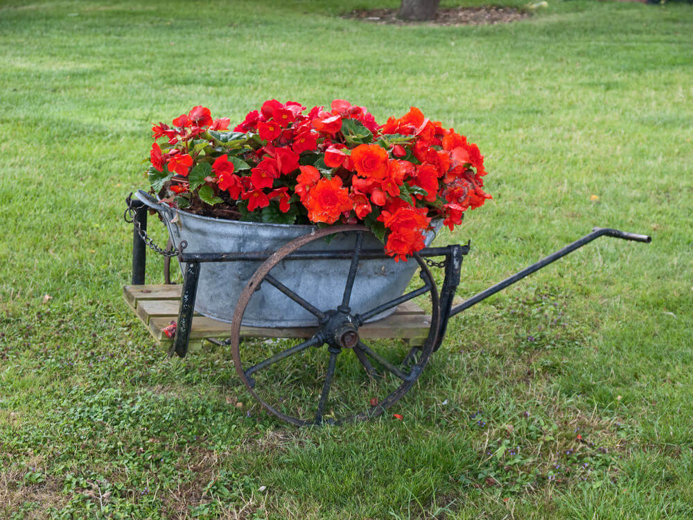 The star here is the large tin tub serving as the planter for the flowers.