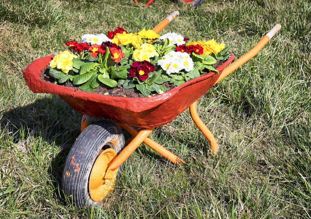 Red and orange wheelbarrow planter adding a colorful splash to the yard.