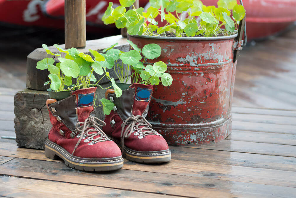 Hiking shoes serving as flower pots.