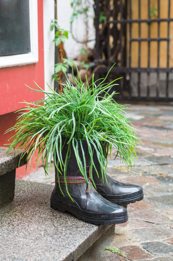 The only rule with using shoes and boots as planters is to be creative and playful. This pair of black gumboots is used as a planter to hold ornamental grass. Fixed at the edge of a stair's starting step, a tribal lace is tied around one of the boots to add a bit of spunk.