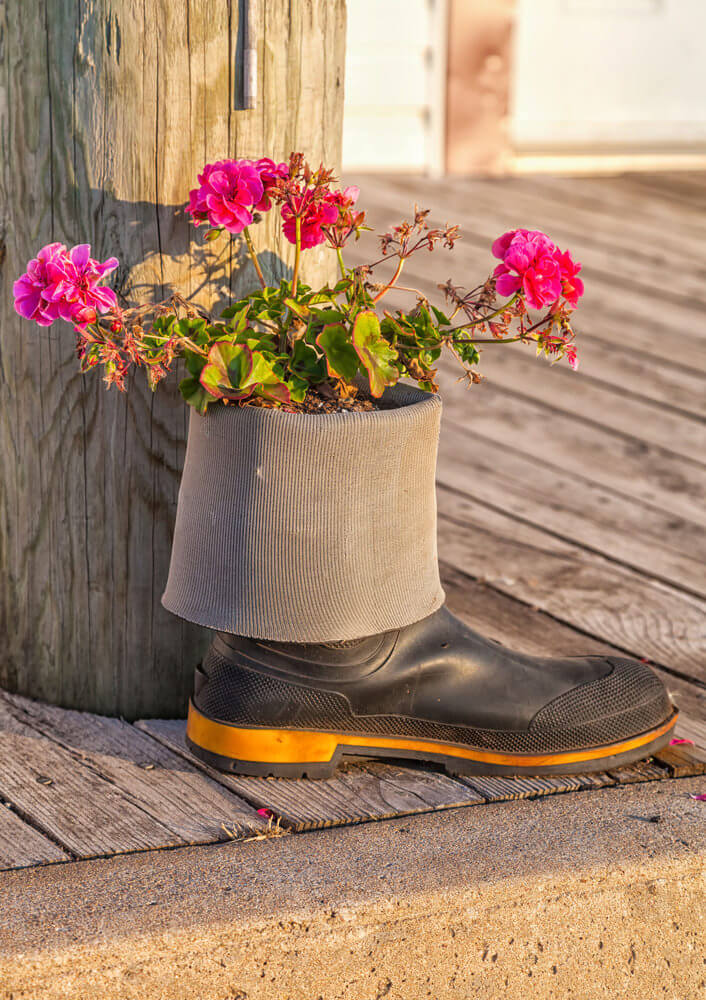 As a planter, this gumboot helps play up the radiance of the pink flowers over its dull-colored wooden backdrop.