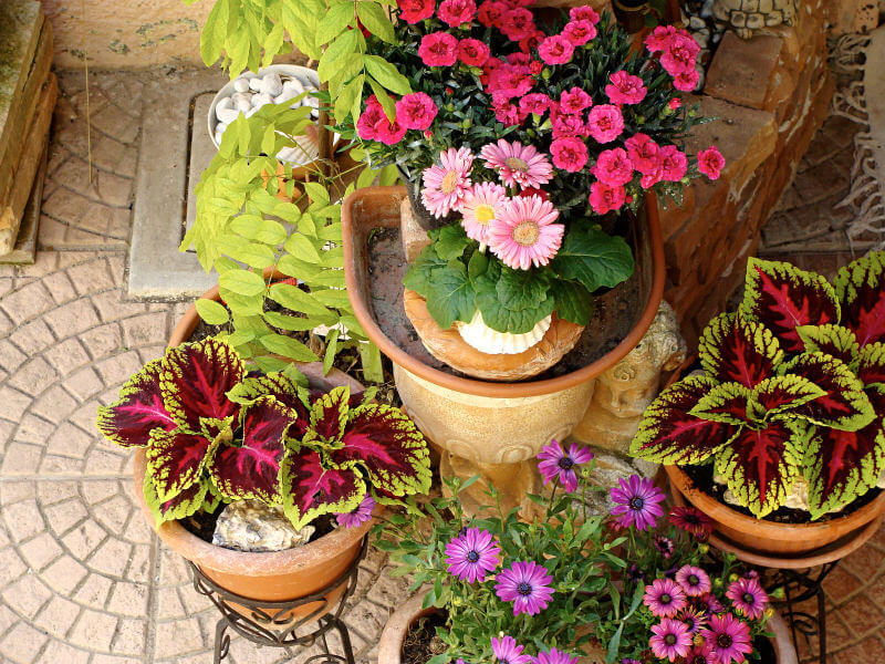 Top-down view of potted plants and flowers in pots elevated in iron pot holders.