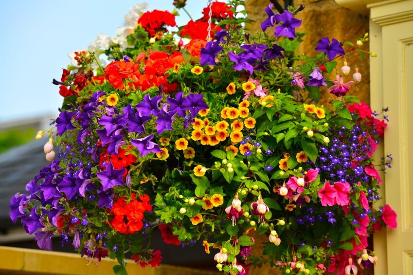 A massive hanging basket filled with a huge variety of flowers, so full you can't even see the basket, the flowers drape down creating a large hanging bouquet of purple, red, yellow, orange, pink and green.