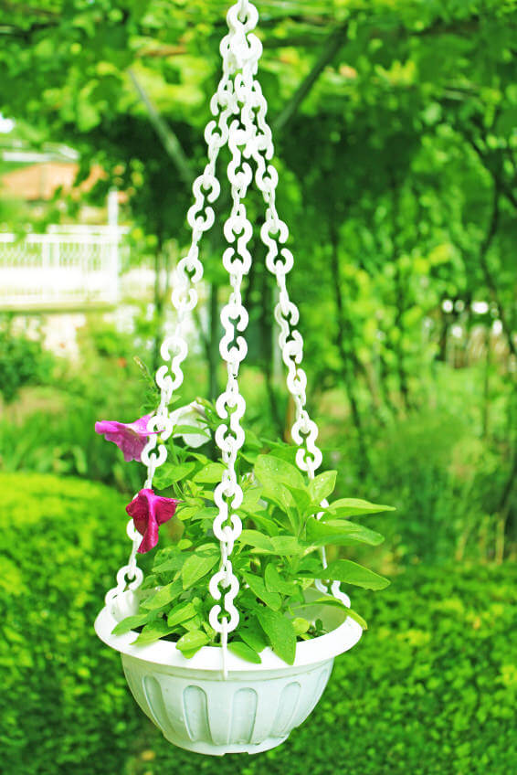 I particularly like this hanging basket because of the classy white pot with large hatching white chain.