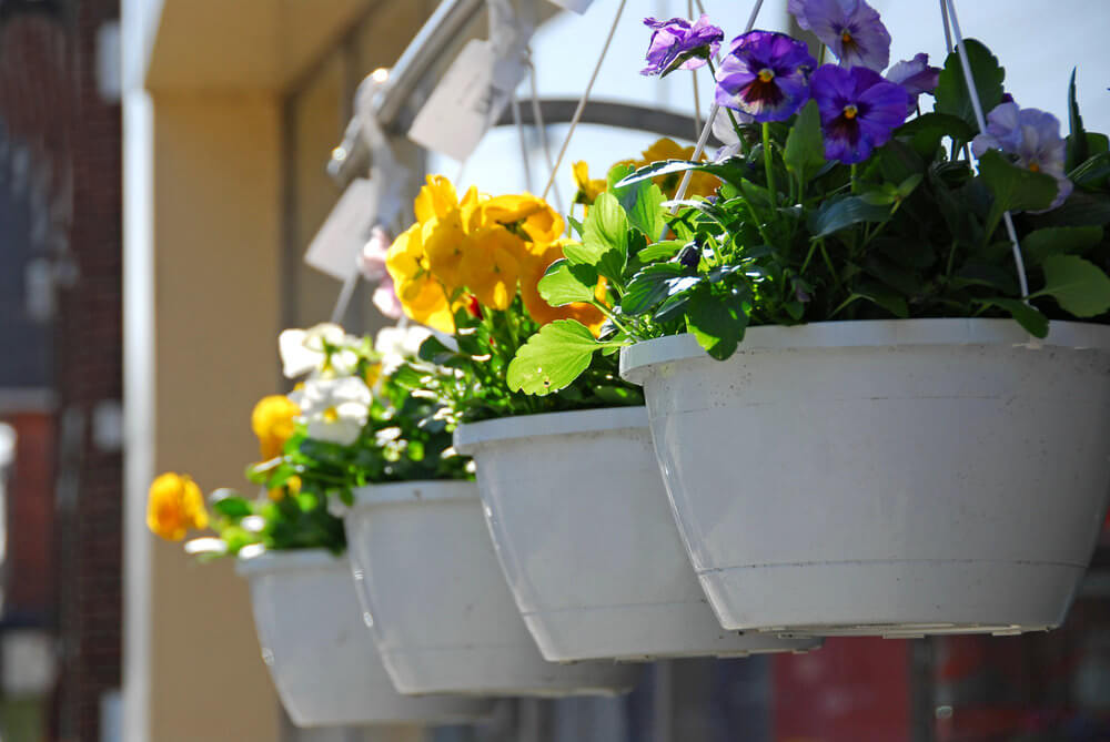 A line of four hanging baskets all in white filled with a variety of flower colours.