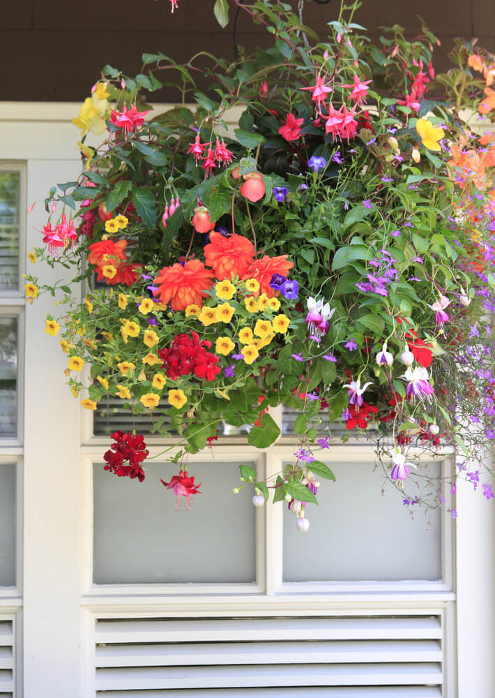 Example of a large hanging flower basket with a wide variety of flower types and colours including yellow, red, orange, pink and purple.