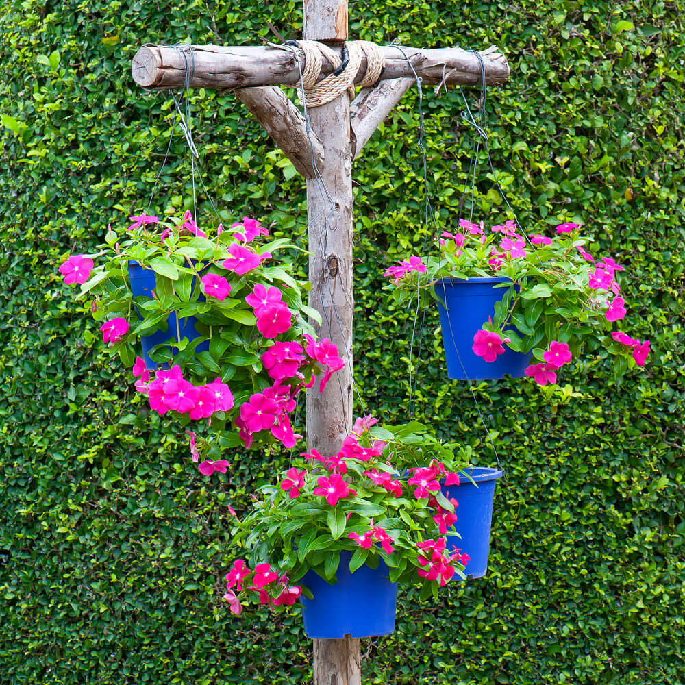 Log post used to hold up for hanging flowers in blue buckets in front of a tall leafy green hedge.