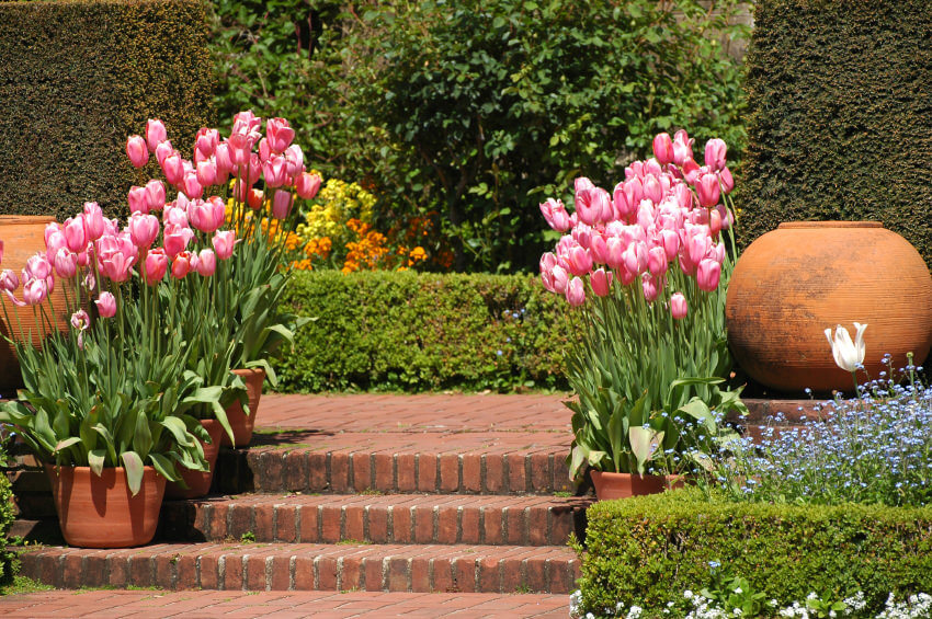 One of the simplest ideas you can follow. Several medium sized clay pots planted with tulips rest on each step's corners and a pair of huge round shaped clay pots in each corner.