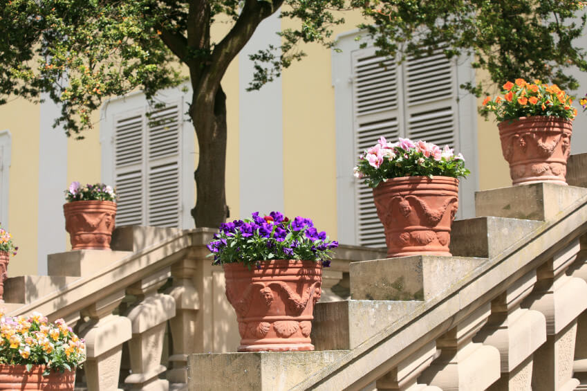 The flowers and gothic designed pots stand out on plain or unpainted concrete staircase handrails. Different colors of petunia gives light to the dull mood of the outdoor steps.