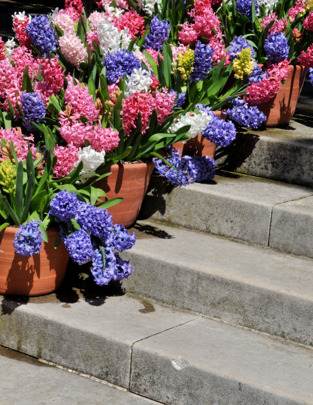 Geranium, lilac, hyacinth or the like are the best flowers you can plant in short clay pots and then place on narrow outdoor steps. Since these types of flowers bloom on a bush, especially in spring time, it will look wonderful like this picture shows.