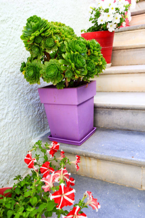 As you can see, these pots are in different shapes and colors yet are still catchy because of the white wall background and unpainted steps. Different colored petunias and succulents are planted alternately in the pots.