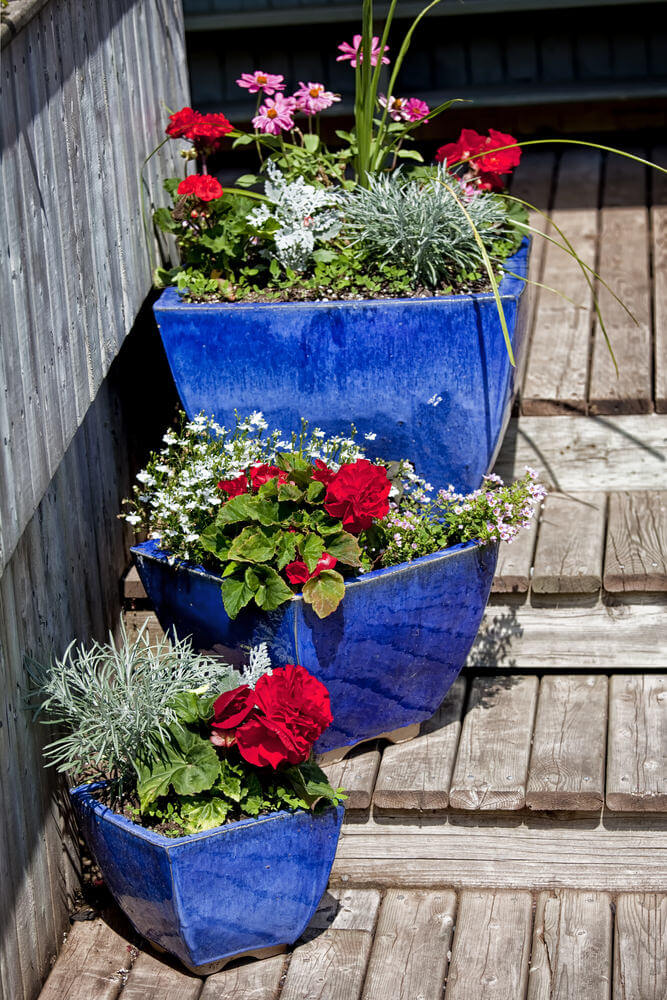 These seem to have consecutive sizes, which are planted with several plants. These look like a mini dish garden planted with grasses, flowers and other plants standing out with their blue colored pots on old wooden steps.