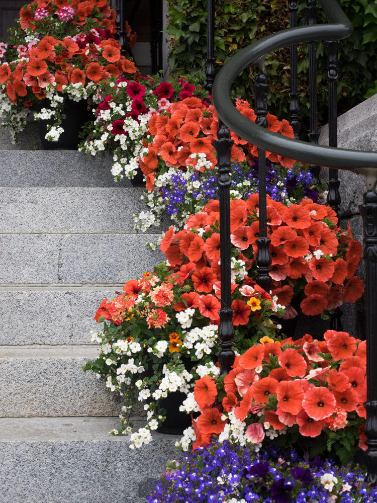 61flower-pots-on-stairs