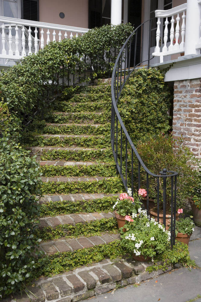 Crawling vines are allowed to completely cover one side of the iron railing for this grand outdoor staircase. The vines have also crawled across the stairs' risers and have entirely taken up the back. Crawling vines are able to add character as landscape cover.