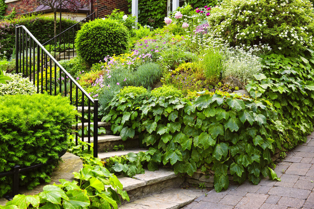 Maple-leaf arrow-wood shrubs make for a decorative exterior of the outdoor garden. Low-lying shrubs of various types follow the direction of the staircase but keep the iron railing completely untouched.