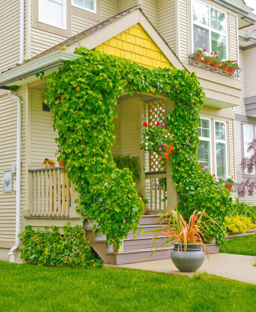 Wild green vines look even more functional as it ornaments the facade of this simple house.