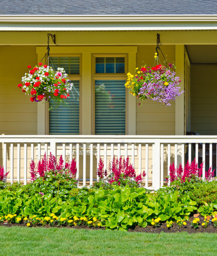 Celosia blooms and begonias highlight the fence's view while hanging petunias are the stars fully occupying the upper view.