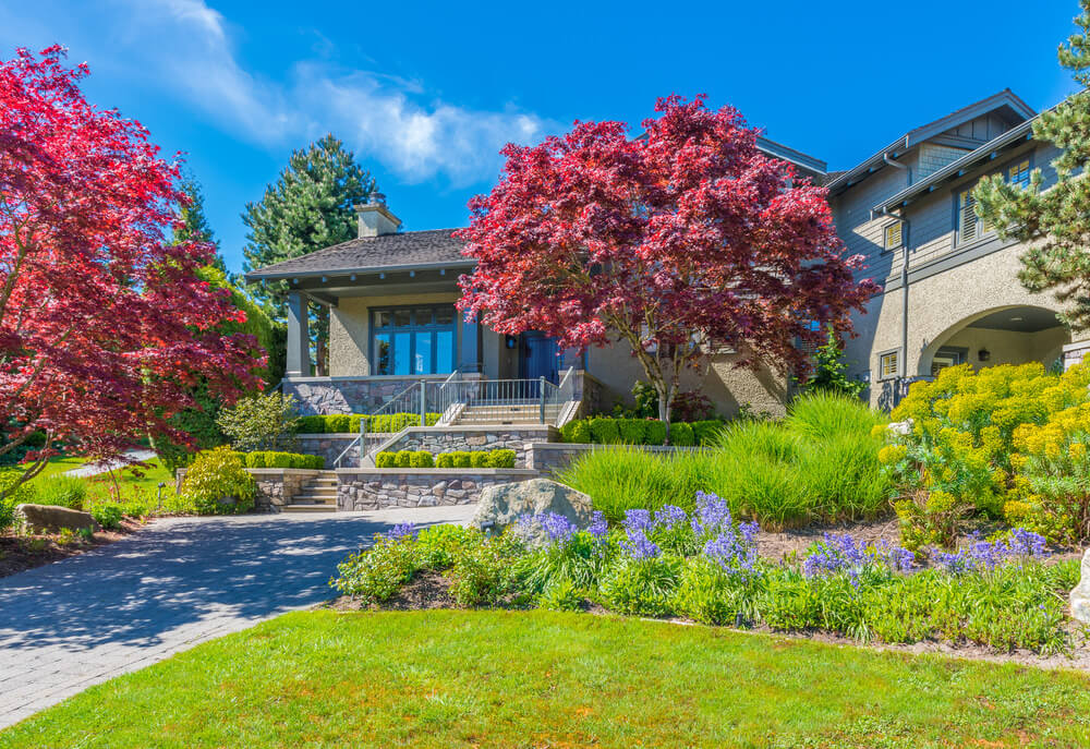 Along a brick path grows maple trees, purple and yellow blossoms. In addition to this are landscape grasses and trimmed shrubs lined along the rows.