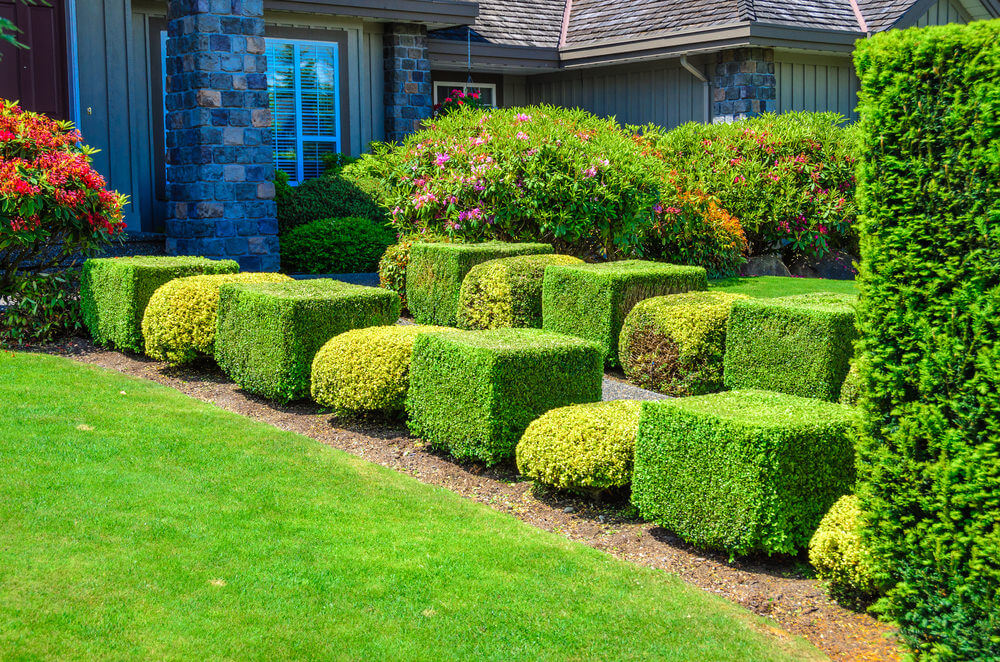 Green ornaments pruned into round and square shapes attract attention. These are called topiary.