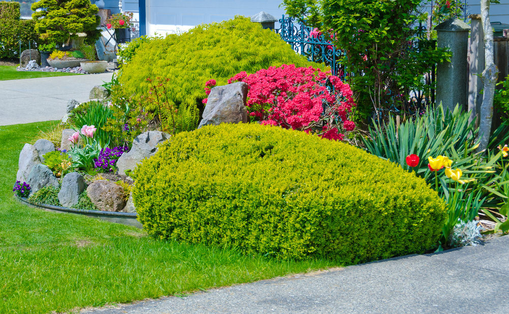 Green Japanese maple shrubs, daffodils, pansies and other green shrubs gives volume to a plain grassy front yard.